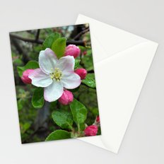 Rain drops on little flower Stationery Cards