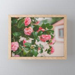 Camellias Framed Mini Art Print