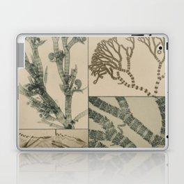 Patterns In Nature Laptop & iPad Skin