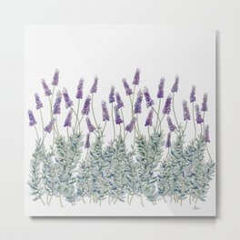 Lavender, Illustration Metal Print