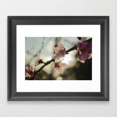 Peach Blossoms Framed Art Print