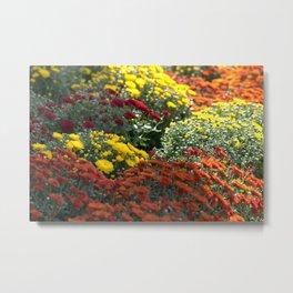 Chrysanthemum Flowers Variety Metal Print