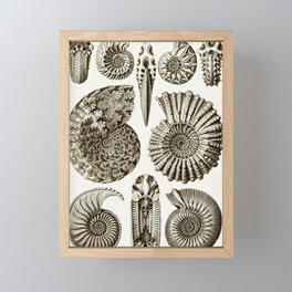 Ernst Haeckel Ammonitida Ammonite Framed Mini Art Print