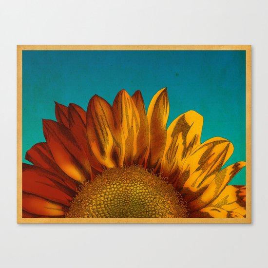 A Sunflower Canvas Print