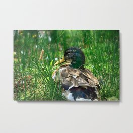 Into the Wilderness - Colorful Metal Print