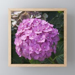 Hydrangea Pink Framed Mini Art Print