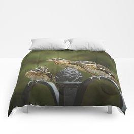 Grosbeaks Three Comforters