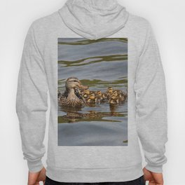 Mallard duck and ducklings Hoody