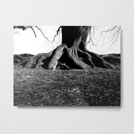 Trunks of tree Metal Print