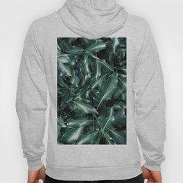 Ivy 01 Hoody