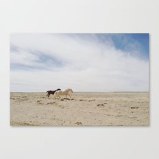 Bloomfield Horse Run Canvas Print