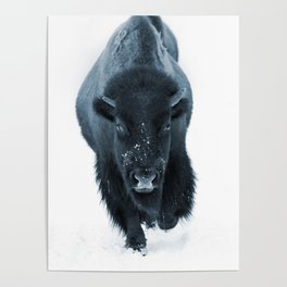 Walking With Bison Poster