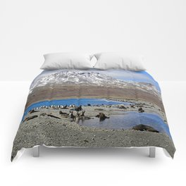 Fur Seals on the Beach Comforters
