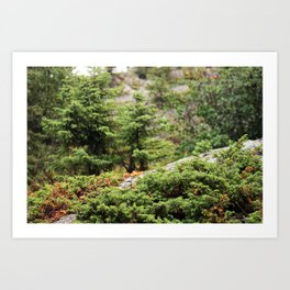 Within the Silent Forest Art Print