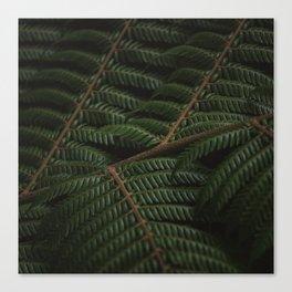 Fern 3 Canvas Print