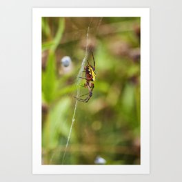 Yellow and Black Argiope Art Print