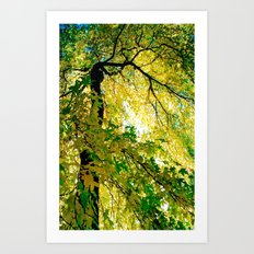 Turn Of The Season Art Print