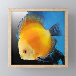 Yellow Disc Fish Modern Framed Mini Art Print