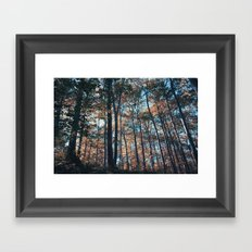 into the woods 09 Framed Art Print