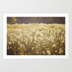 Spinning daisies Art Print