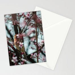 Peek-A-Boo - Spring Finch Stationery Cards