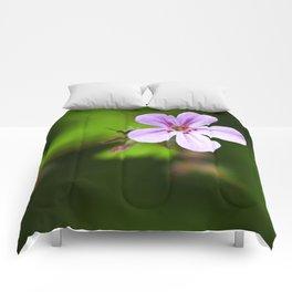 Geranium Robertianum Comforters