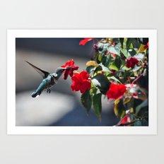 Hummingbird at the Flowers Art Print