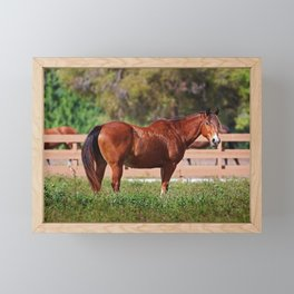A Horse is a Horse Framed Mini Art Print