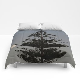 Araucaria tree, full moon, flight of birds Comforters