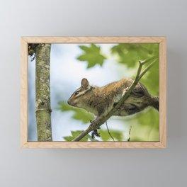 Out On a Limb Framed Mini Art Print