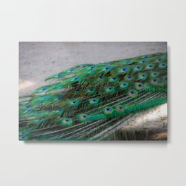 Peacock Tailfeather Blues Metal Print
