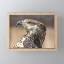 Young African Fish Eagle Framed Mini Art Print