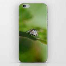 Jumping Spider iPhone & iPod Skin