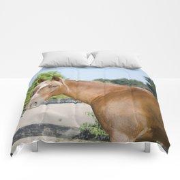 Striking Chester Comforters