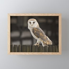 Barn Owl Framed Mini Art Print
