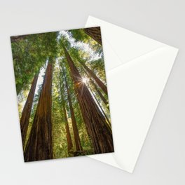 Majestic California Redwoods Stationery Cards