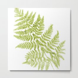 Fresh Fern Modern Botanical Metal Print