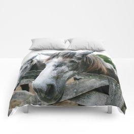 Horse II // Ohio Comforters