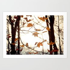Sunlight Through the Branches Art Print