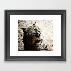 Catterwalling Framed Art Print