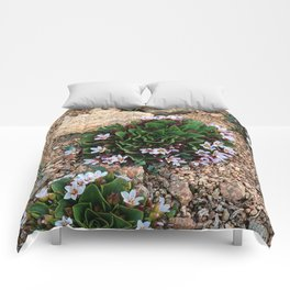 Alpine Spring beauty Colorado Comforters