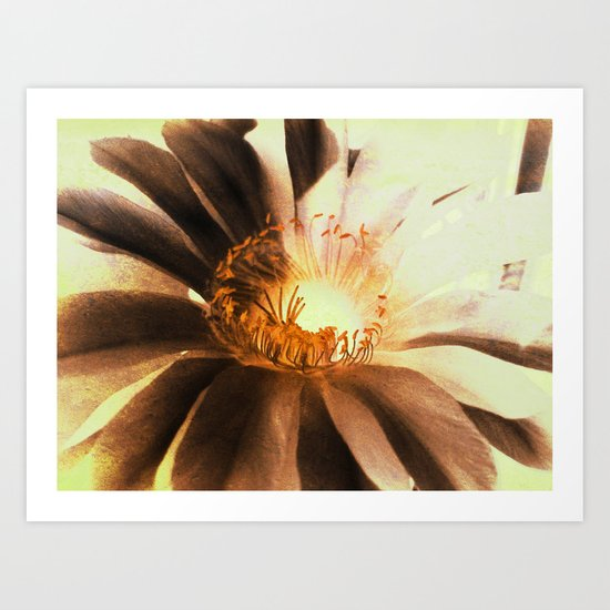 Kaktus Flower Art Print