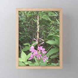 North American Fireweed Framed Mini Art Print