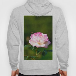A Rose Flower And A Honey Bee Hoody