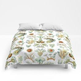 Ernst Haeckel - Scientific Illustration - Bryozoa Comforters