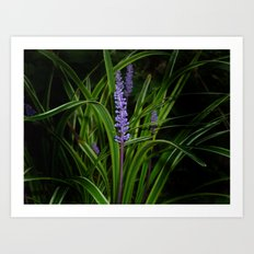 Wild flower... Art Print