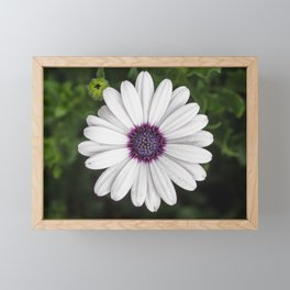 Flower Portriat - Purple Power Framed Mini Art Print
