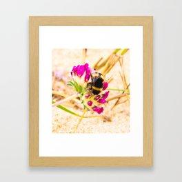 bumble been on a dune flower Framed Art Print