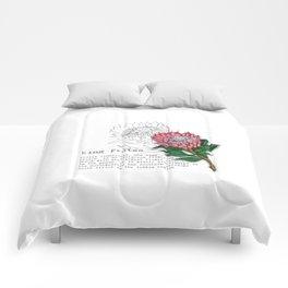 King Protea Comforters