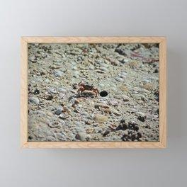 Fiddler Crab Framed Mini Art Print